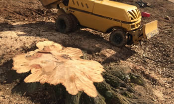 Stump Removal in Albany NY Stump Removal Services in Albany NY Stump Removal Professionals Albany NY Tree Services in Albany NY