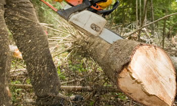 Tree Service in Albany NY Tree Service Estimates in Albany NY Tree Service Quotes in Albany NY Tree Service Professionals in Albany NY
