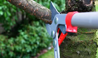 Tree Pruning Services in Albany NY